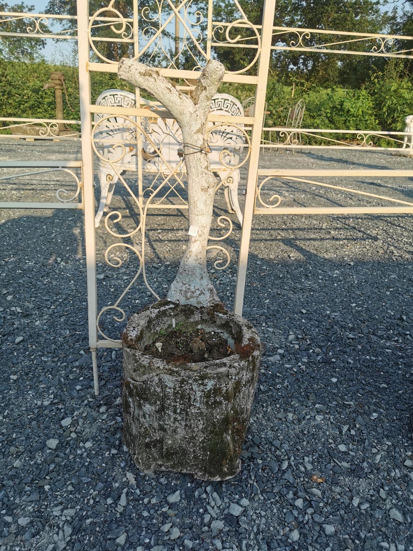 Composition planter