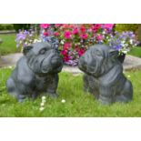 Pair of models of seated Bull dogs