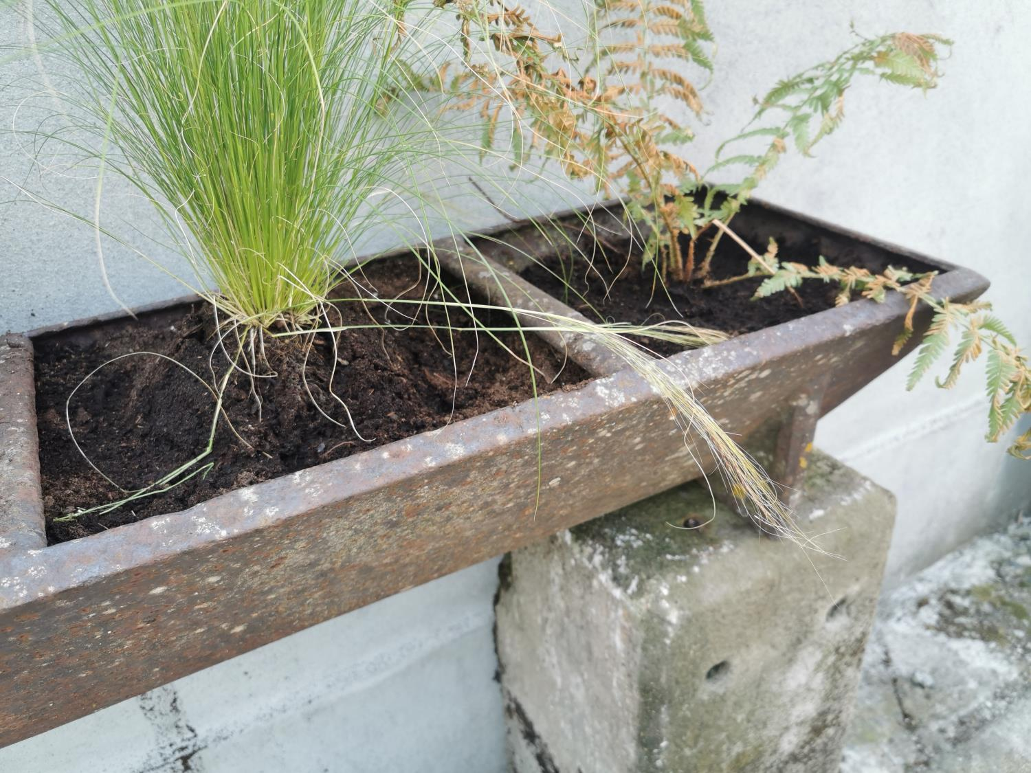Early 20th C cast iron pig feeder/planter. - Image 4 of 4