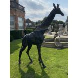Exceptional quality life-size bronze model of a Giraffe.