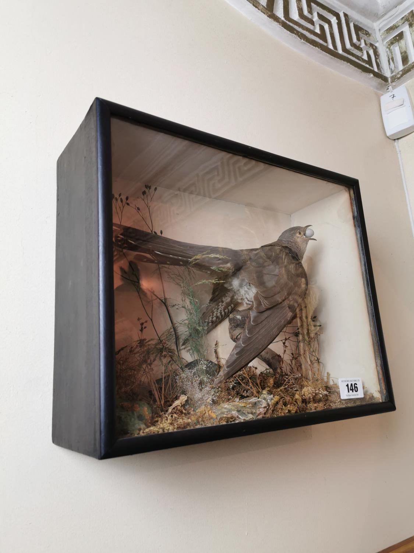 19th. C. taxidermy cuckoo - Image 3 of 3