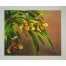"""Hilo Chen (B.1942), BLOSSOM-12 (ORCHIDS), 1981, Watercolour; signed, titled and inscribed """"8123"""" in"""