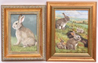 Brian Tovey, a pair of oil paintings on board. Rabbit warren and rabbit. Both signed. Approx