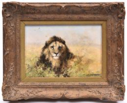 An original David Shepherd oil on canvas. Showing a lion at rest, facing forward in amongst scrub.