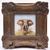 An original David Shepherd oil on canvas. A small study of an elephant walking amongst scrub.