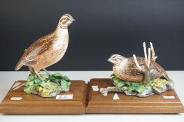 Royal Worcester Porcelain Birds 'Bob-white Quail, male' impressed mark 459 and 'Bob -white Quail,