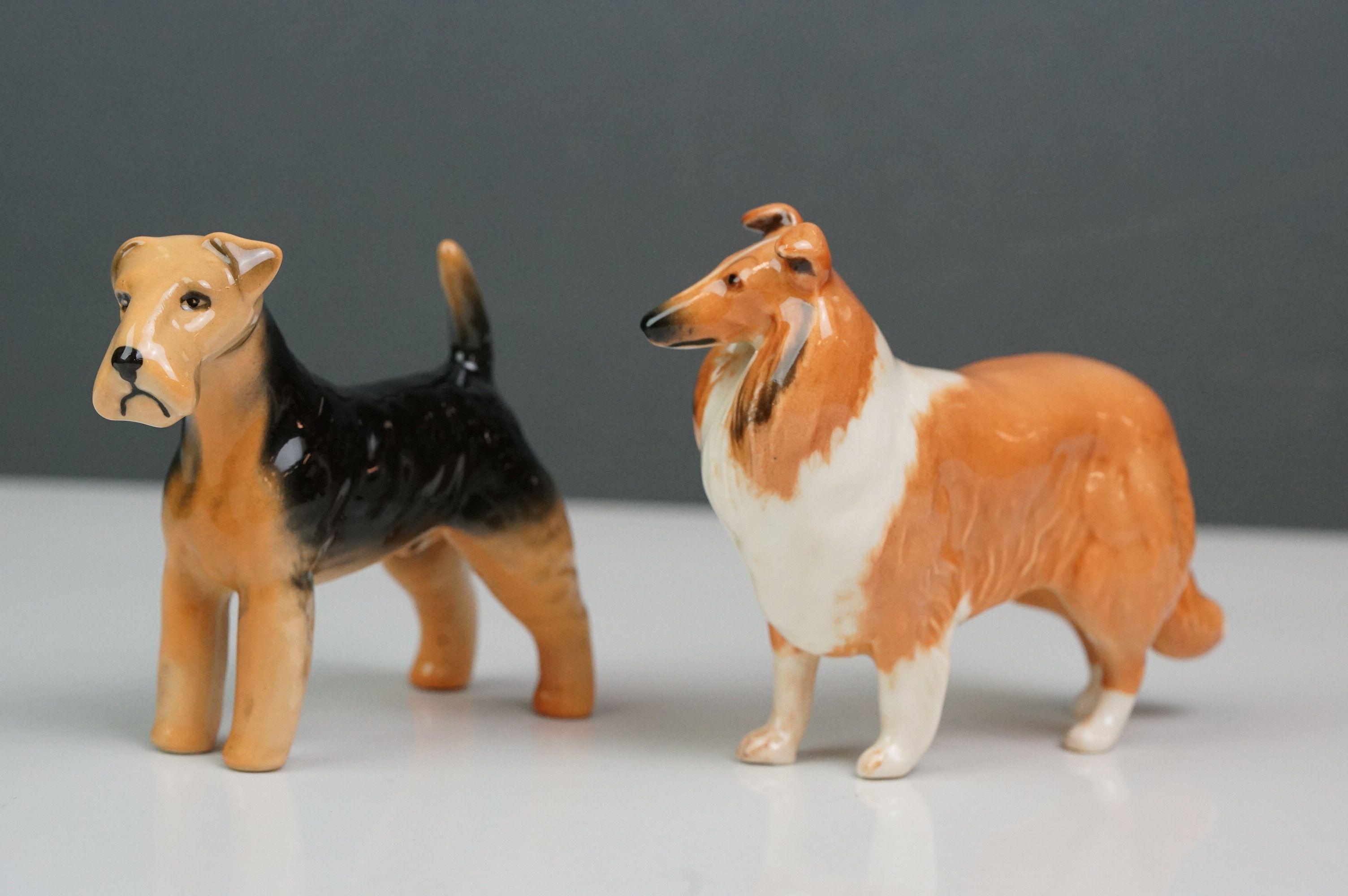 Six Beswick dogs: Bulldog Bosun small, model no. 1731; Corgi small, model no. 1736; Collie small, - Image 3 of 12