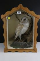 Vintage taxidermy barn owl in shaped pine case