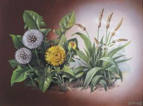 SHERGOLD (British 20th/21st Century) Dandelion & Plantin, Oil on board, Signed lower right, titled