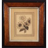 A Sepia Ink Sketch of Sunflowers initialled JA and dated 1904: One of the flower heads having the