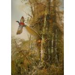 ‡Ferdinand (20th Century) A pheasant takes flight Signed Ferdinand (lower right) Oil on canvas 61