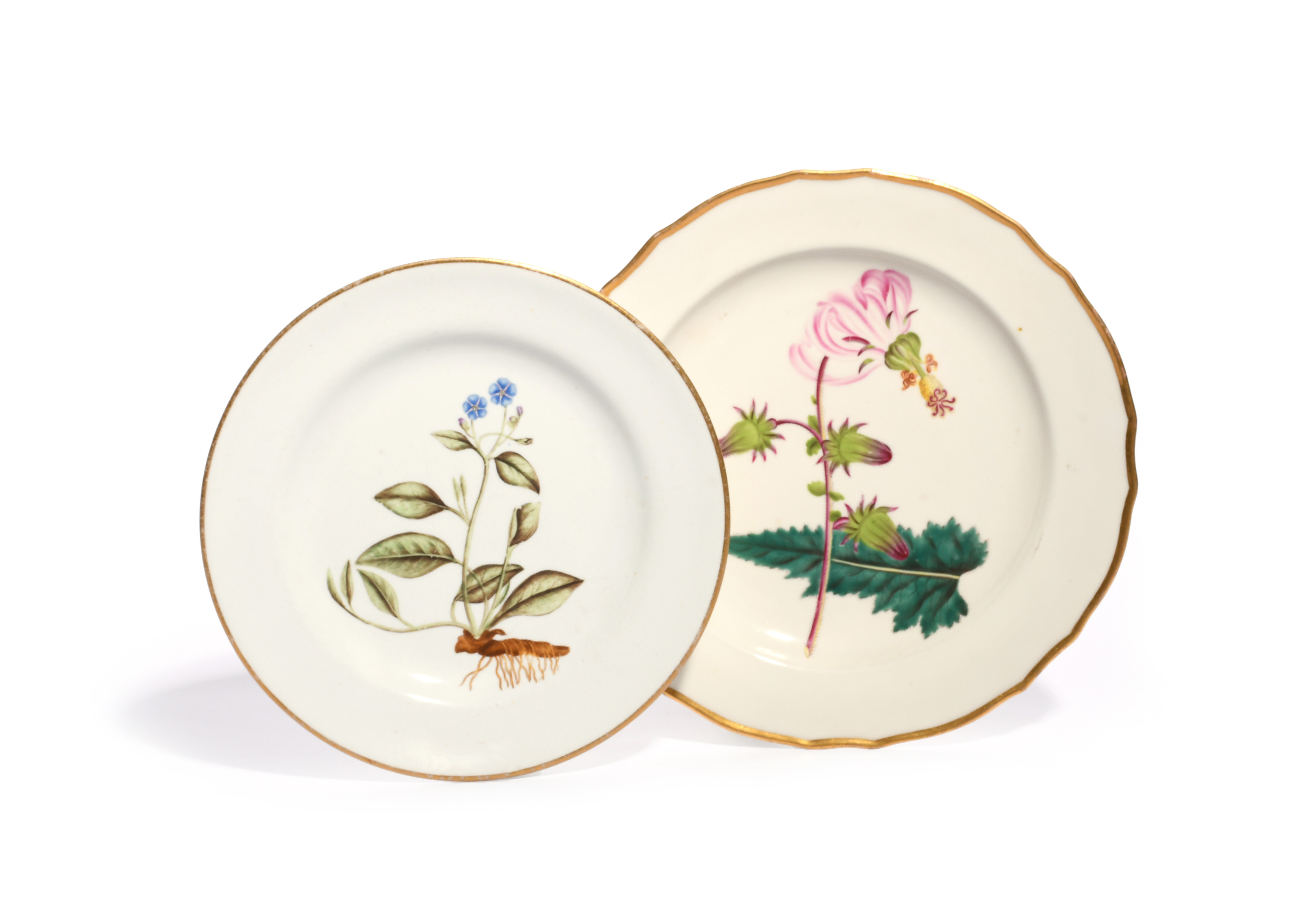 Two English porcelain botanical plates c.1790-1800, one Derby and painted with a specimen of