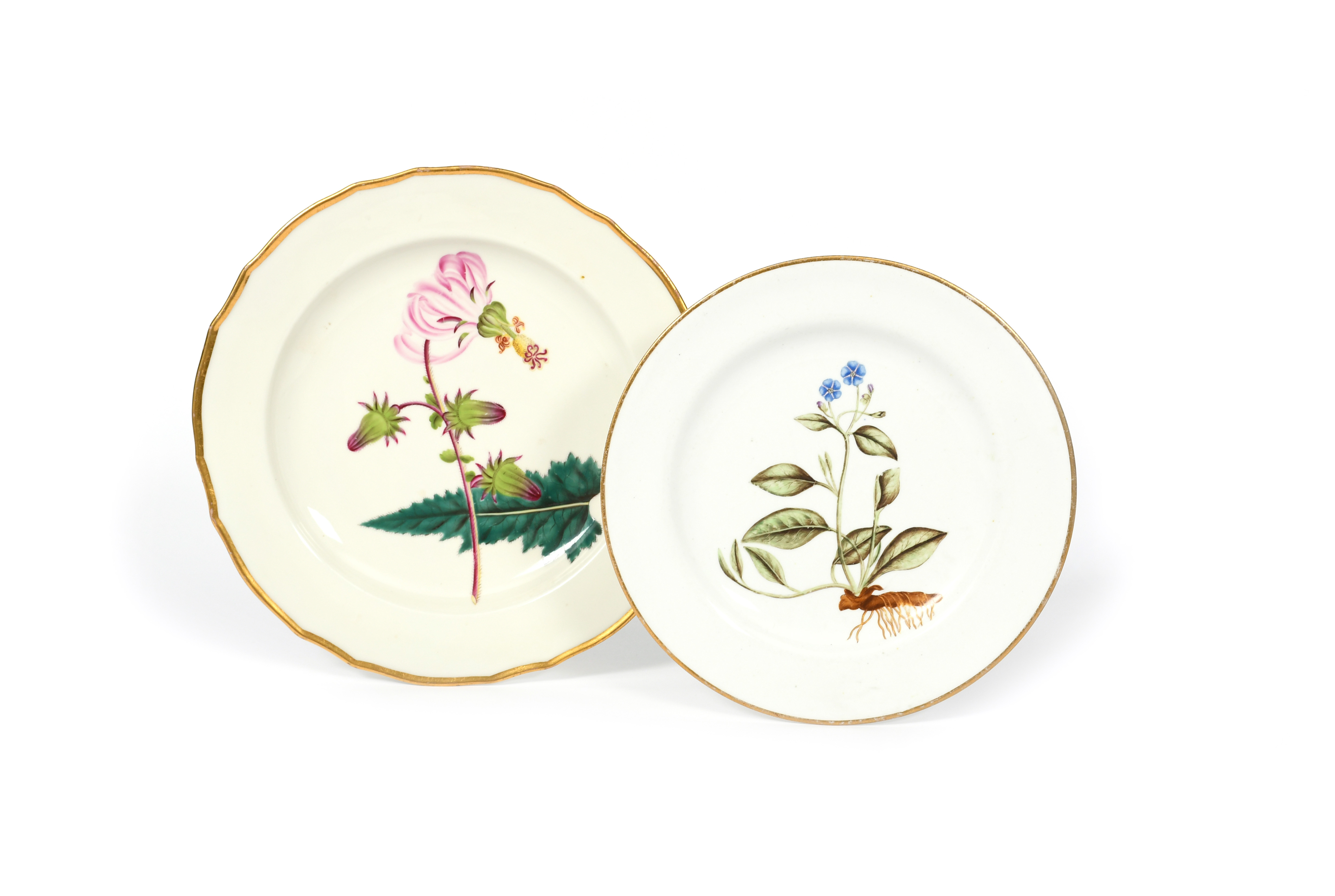Two English porcelain botanical plates c.1790-1800, one Derby and painted with a specimen of - Image 2 of 2