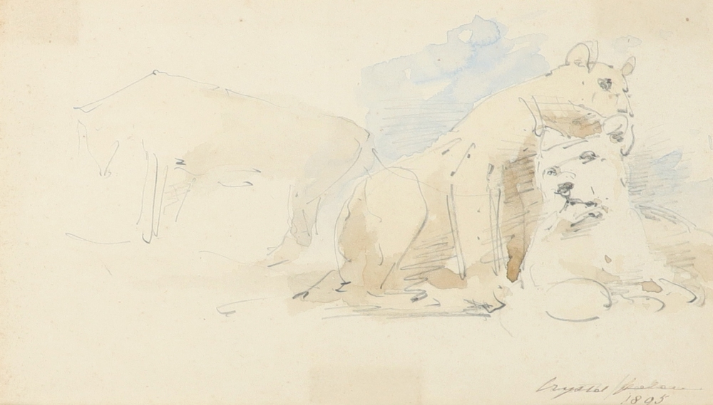 William Strutt RBA (1825-1915) Study of two lionesses; Lioness and lion; Study of two recumbent - Image 7 of 9