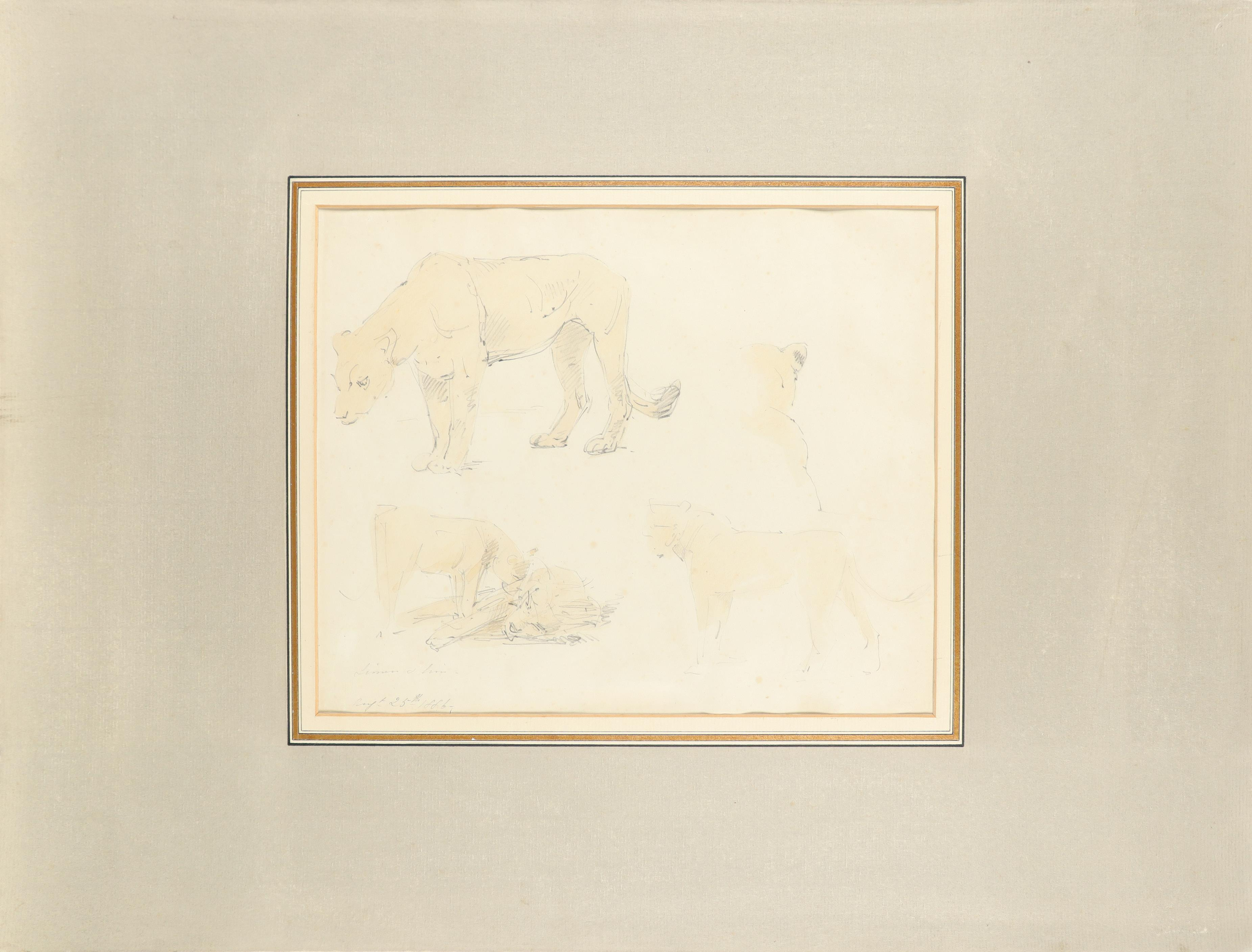 William Strutt RBA (1825-1915) Study of two lionesses; Lioness and lion; Study of two recumbent - Image 5 of 9