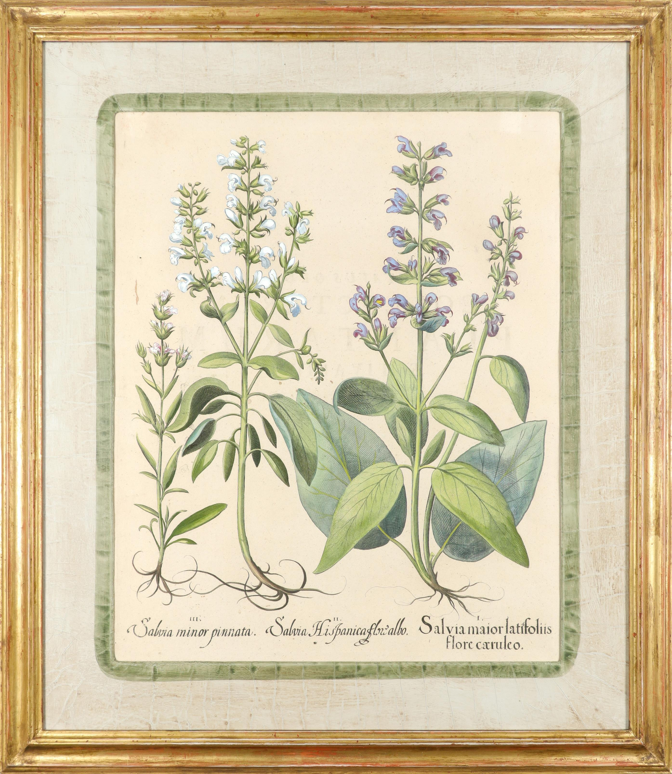 After Basilius Besler Poma flore multiplici; Aquilegia stellata flore vio laceo; Cytisus - Image 29 of 36
