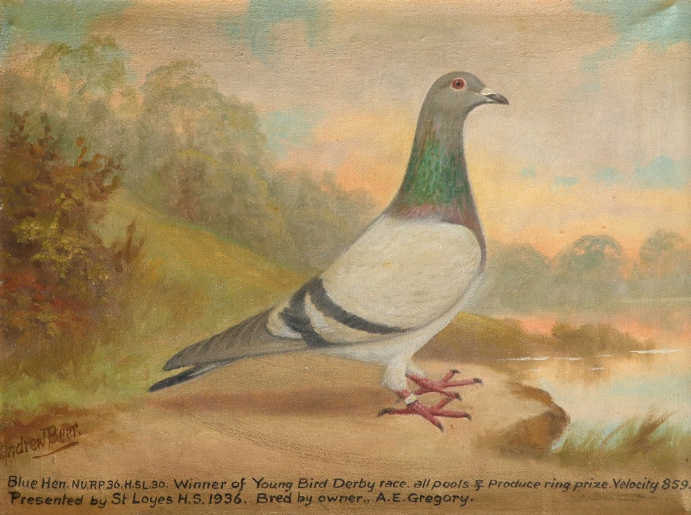 ‡Andrew Beer (1862-1954) Portrait of a blue hen racing pigeon Signed Andrew Beer (lower right) and