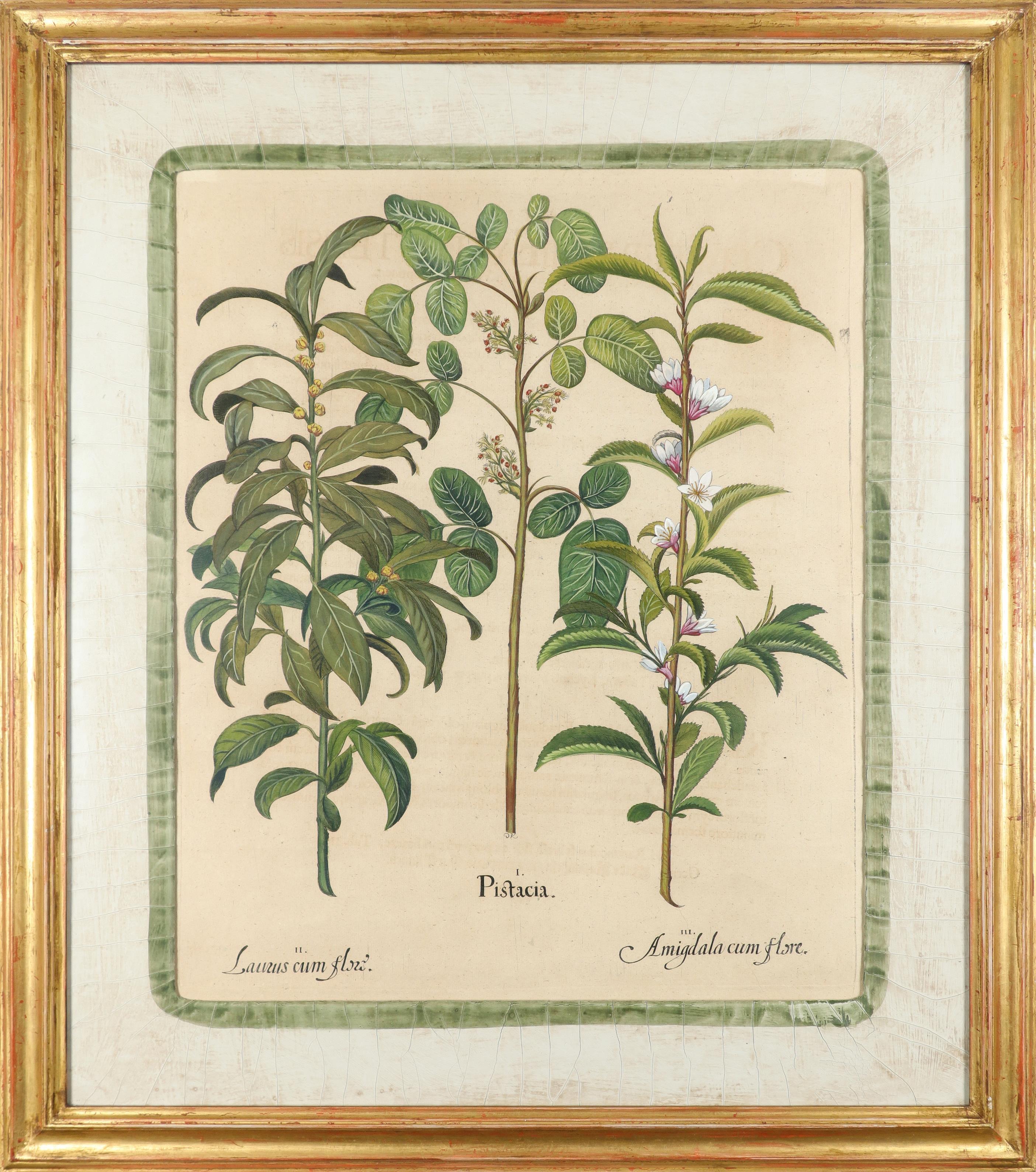 After Basilius Besler Poma flore multiplici; Aquilegia stellata flore vio laceo; Cytisus - Image 32 of 36