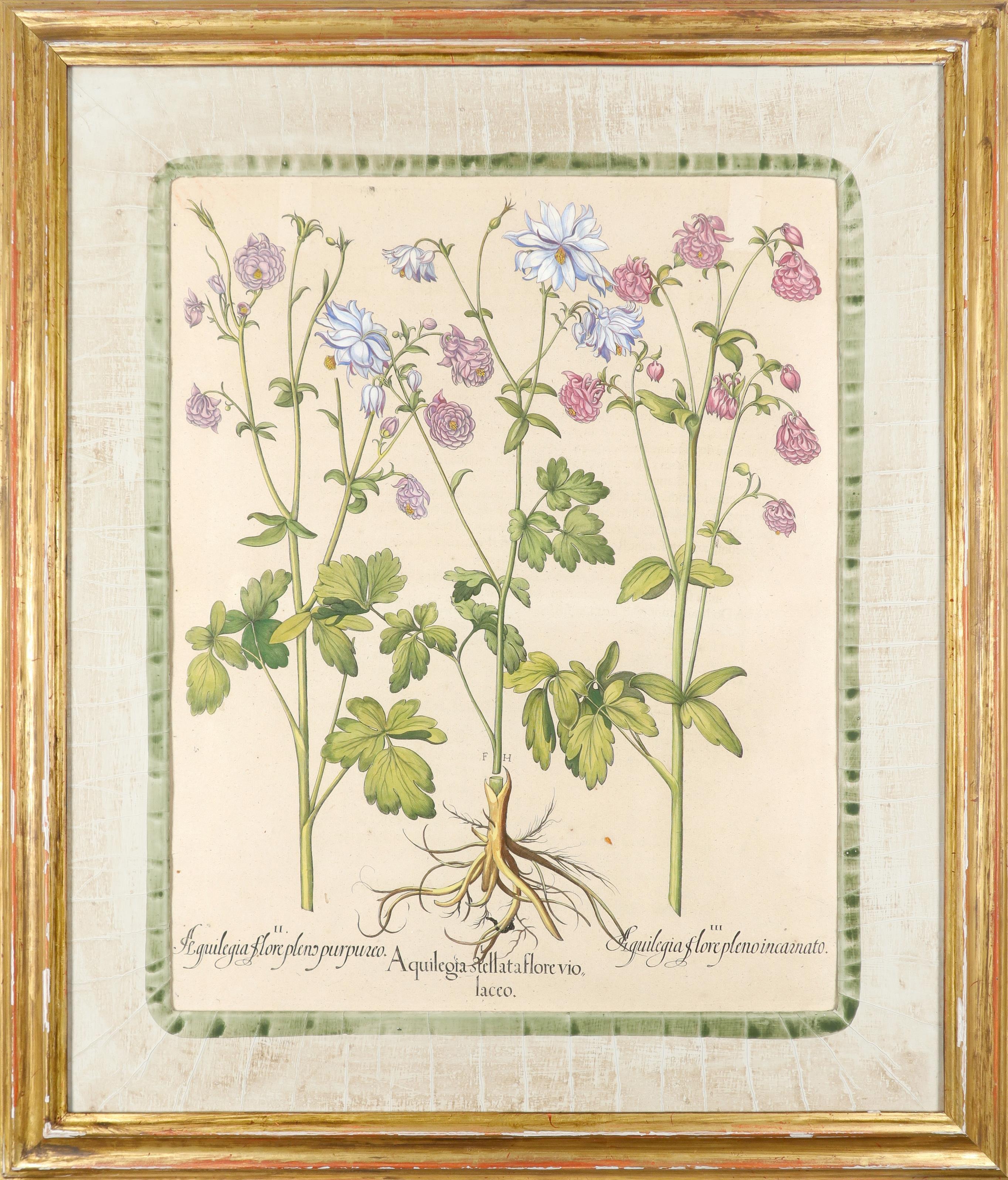After Basilius Besler Poma flore multiplici; Aquilegia stellata flore vio laceo; Cytisus - Image 5 of 36