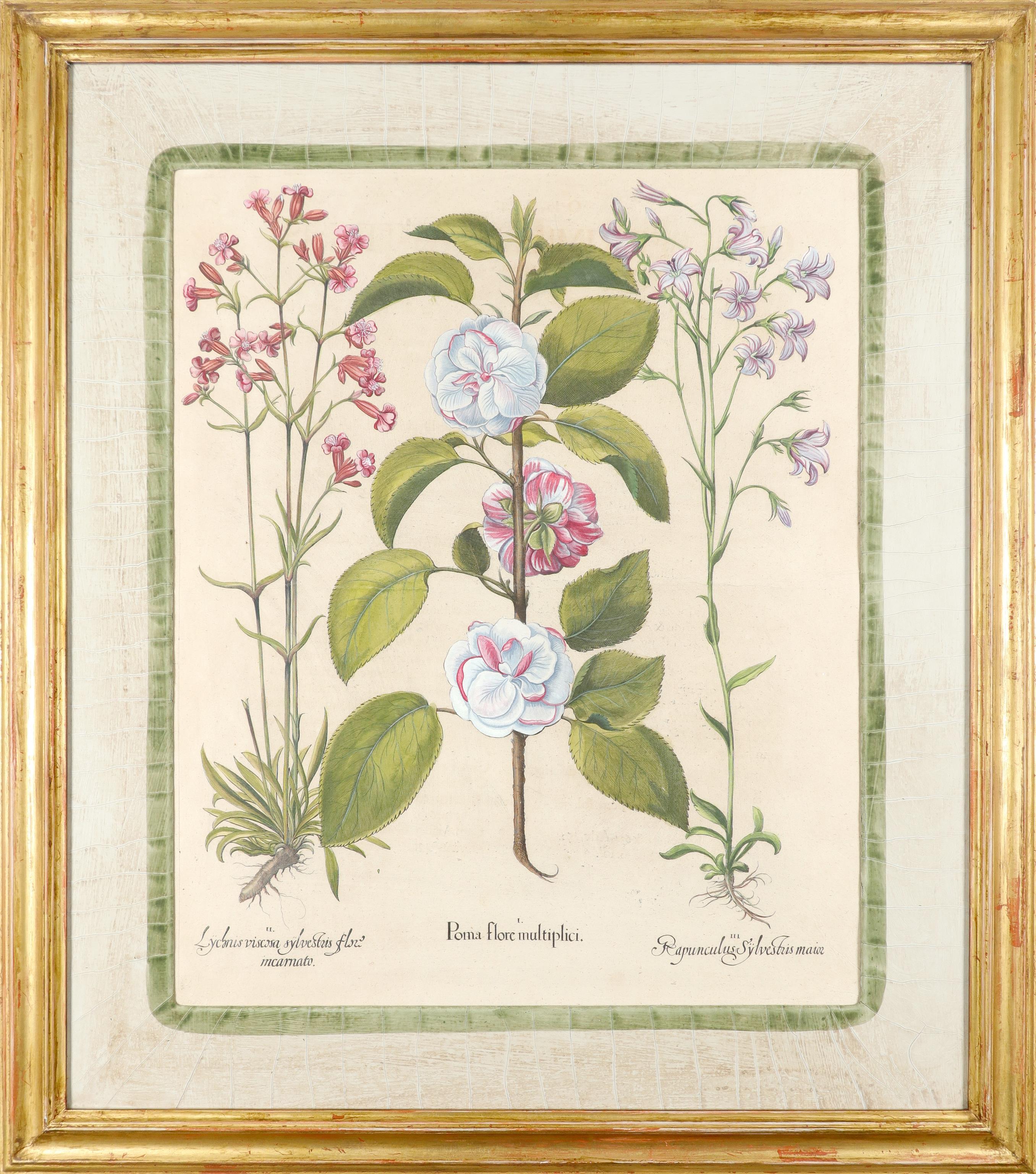 After Basilius Besler Poma flore multiplici; Aquilegia stellata flore vio laceo; Cytisus - Image 2 of 36