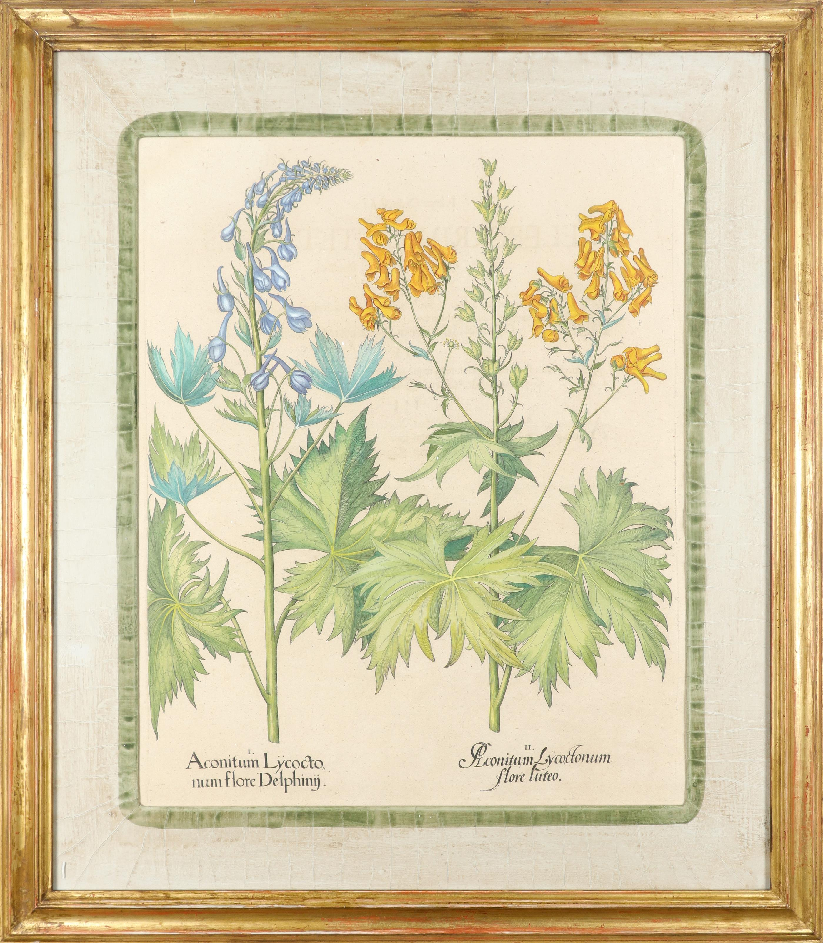 After Basilius Besler Poma flore multiplici; Aquilegia stellata flore vio laceo; Cytisus - Image 20 of 36