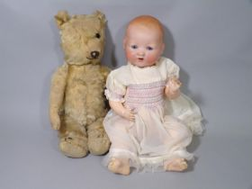 Chiltern type teddy bear with golden mohair, stitched nose and mouth and excelsior stuffing, in very