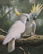 Adrian C Rigby (B.1962) - 'Cockatoo's, Lesser Sulpher Crest', signed, inscribed Alexander Gallery