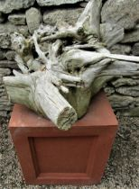 A dried and weathered root sculpture raised on a terracotta coloured plinth, 70cm high overall,