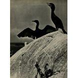 ELIOT PORTER - Double Crested Cormorants, Colt's Head Island, Maine - Original vintage photogravure