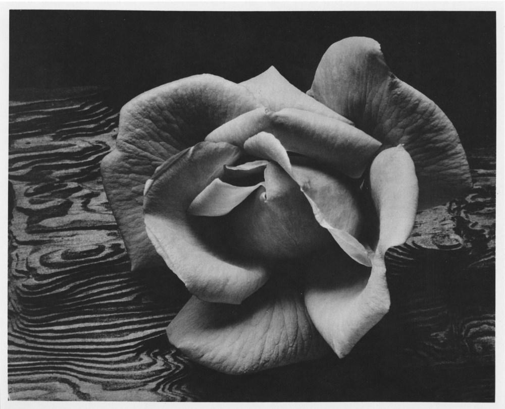 ANSEL ADAMS - Rose and Driftwood, San Francisco, California - Original photogravure