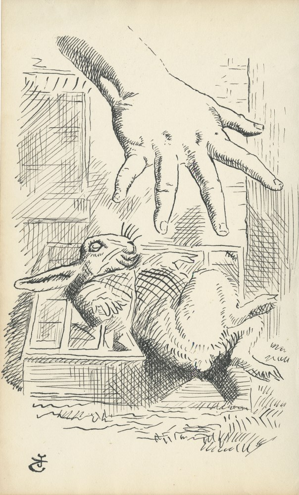 JOHN TENNIEL - Alice Dropping the White Rabbit - Ink on paper