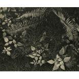 ANSEL ADAMS - Leaves, Mills College, Oakland, California - Original vintage photogravure