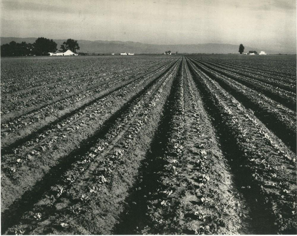 EDWARD WESTON - Lettuce Ranch, Salinas, California - Original vintage photogravure