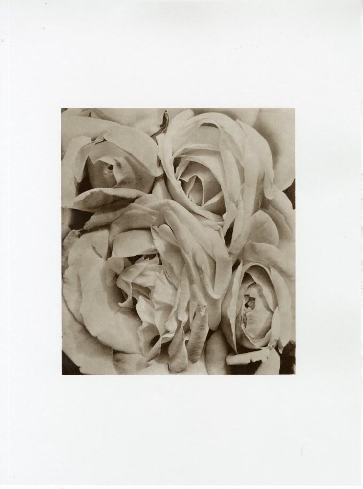TINA MODOTTI - Roses, Mexico - Original photogravure