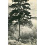 CHIN-SAN LONG [lang jingshan/lang ching-shan] - Brouillard du matin - Original vintage photogravure