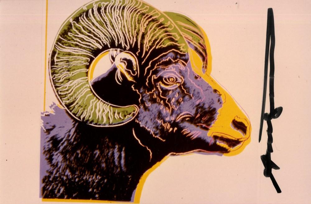 ANDY WARHOL - Bighorn Ram - Original color analogue photograph