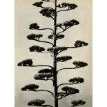 BRETT WESTON - Century Plant - Original vintage photogravure