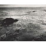 EDWARD WESTON - Sea and Kelp - Original photogravure