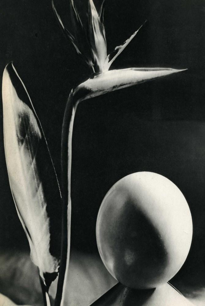 MAN RAY - Oiseau de Fleur de Paradis - Original vintage photogravure