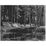 ANSEL ADAMS - Grove, Lyell Fork, Merced River, California - Original photogravure
