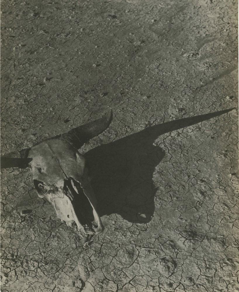 ARTHUR ROTHSTEIN - Skull of Steer, Badlands, South Dakota - Original vintage photoengraving