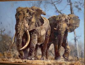 "​James Stroud, oil on canvas. Entitled ""Big Tuskers.73 cm x 98 cm. in a large gilt plaster frame."