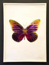 Damien Hirst, foil block print on white, limited edition 5/15, butterfly, signed by the artist in