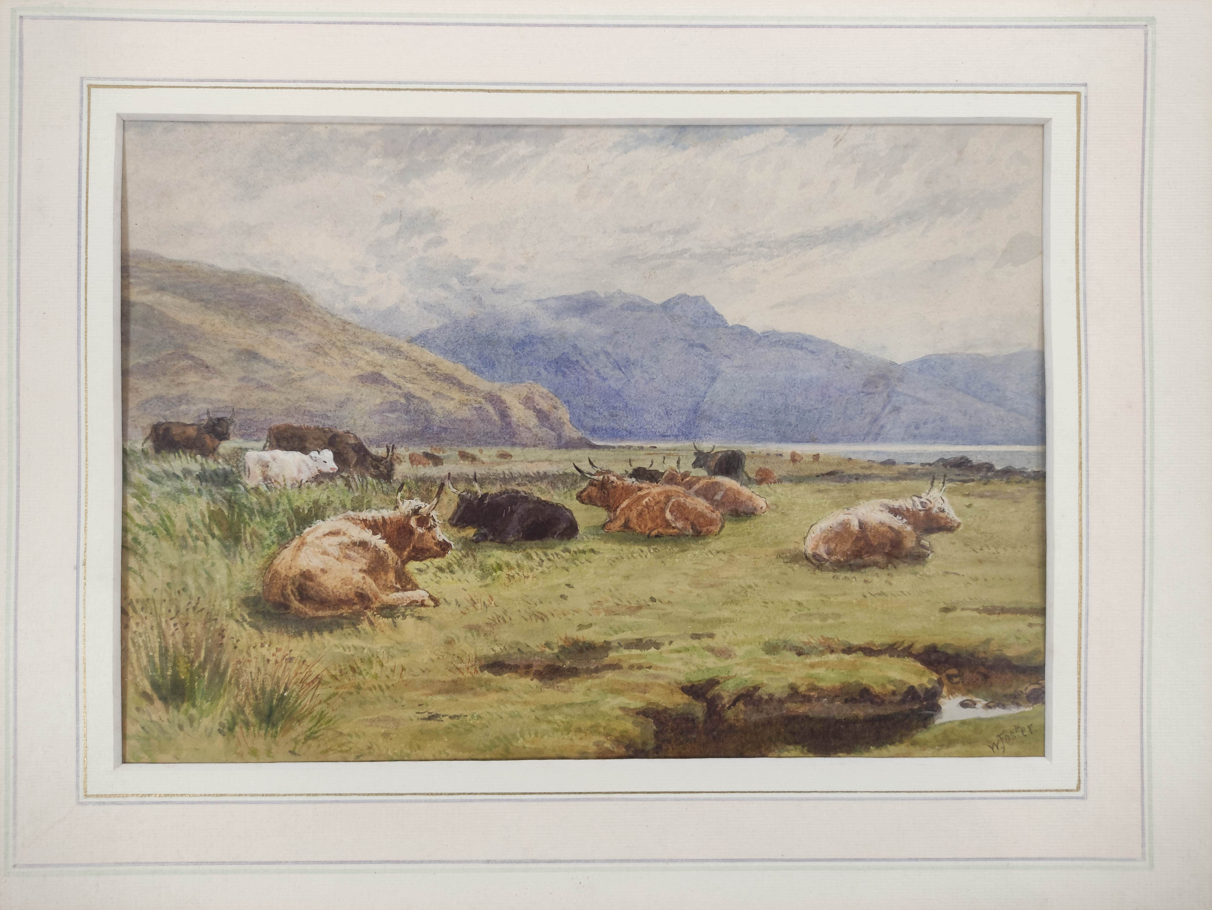 WILLIAM FOSTER. Highland Cattle, Balmacara. Signed, watercolour. 18cm x 26cm. - Image 2 of 5