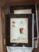 ARTIST UNKNOWN.Toadstools & Fungi. 8 multiple & single image original watercolour drawings,each