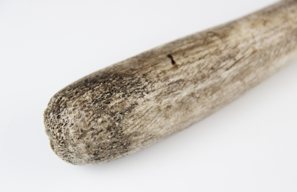 An Inuit Oosik club, walrus baculum (penis bone), 19th century, 48.5cm long overall Provenance: - Image 2 of 3
