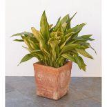 PORTAPIANTE in terracotta con pianta