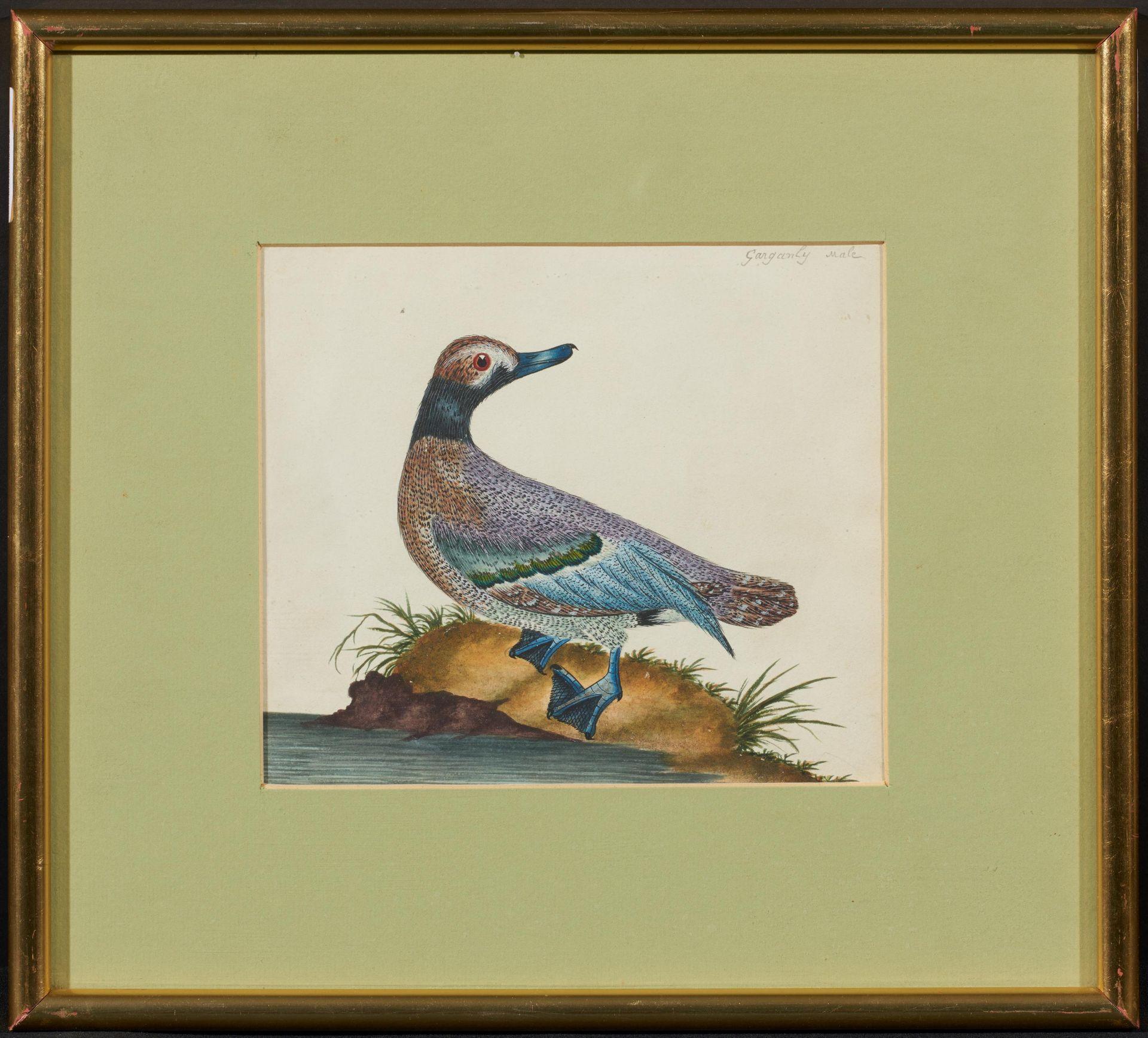 Englischer Meister. um 1900. Drei Aquarelle: Gänse und Enten. Jeweils: Aquarell auf Papier. - Bild 6 aus 11