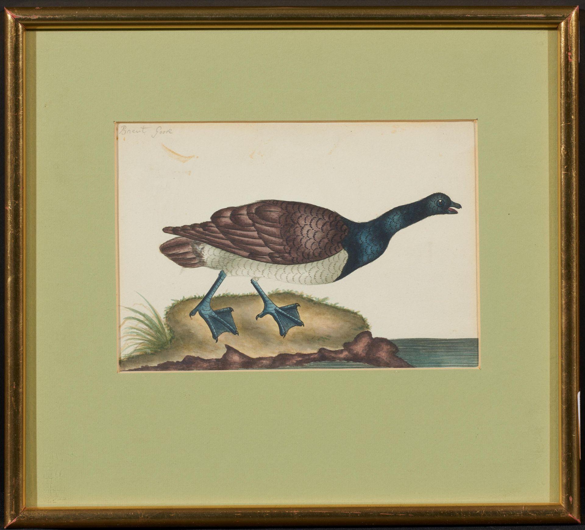 Englischer Meister. um 1900. Drei Aquarelle: Gänse und Enten. Jeweils: Aquarell auf Papier. - Bild 3 aus 11