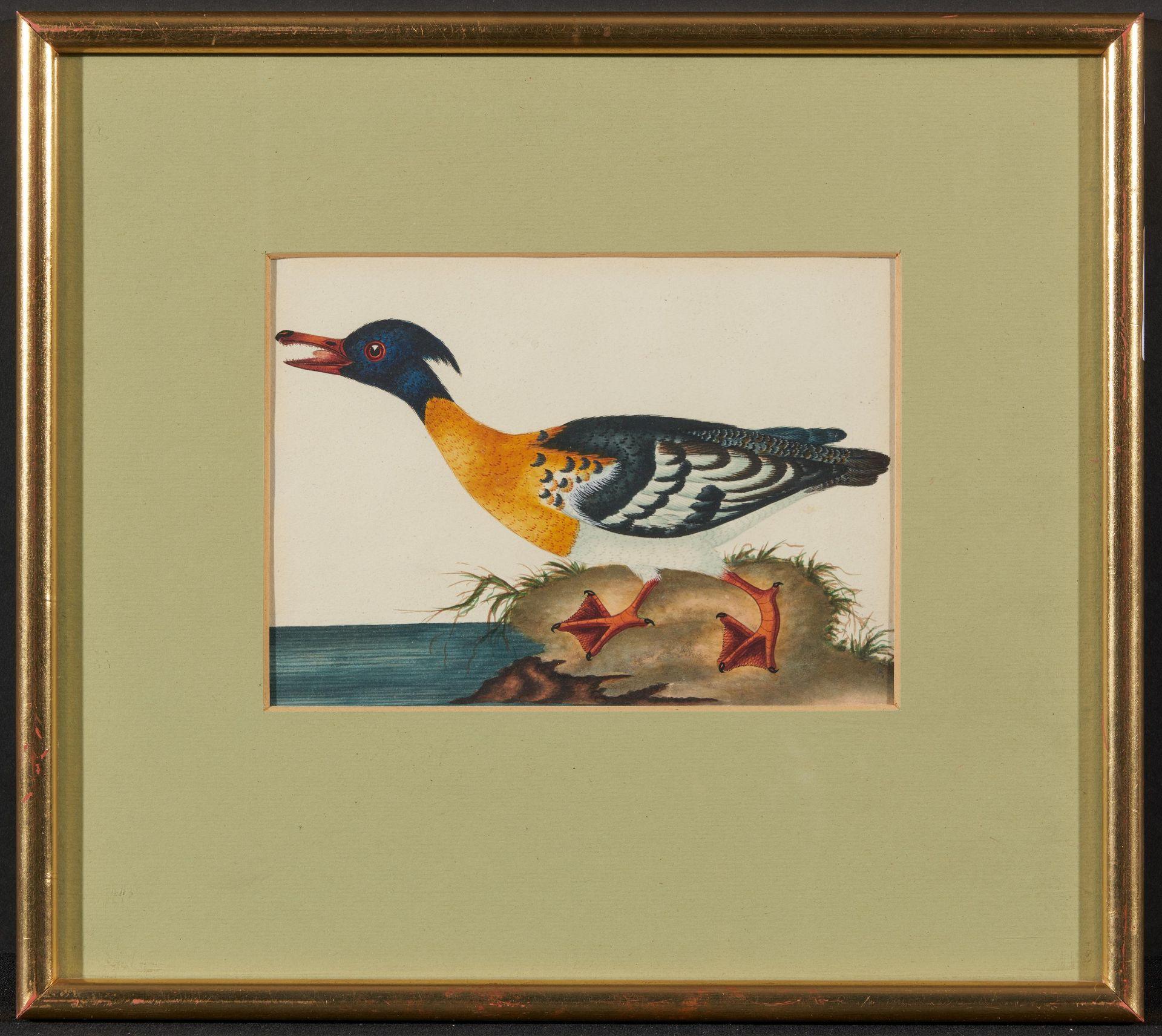 Englischer Meister. um 1900. Drei Aquarelle: Gänse und Enten. Jeweils: Aquarell auf Papier. - Bild 9 aus 11